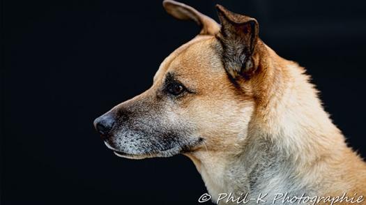 Image de Photographie et Animal de compagnie